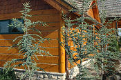 Hand_Hewn_Log_Siding_3